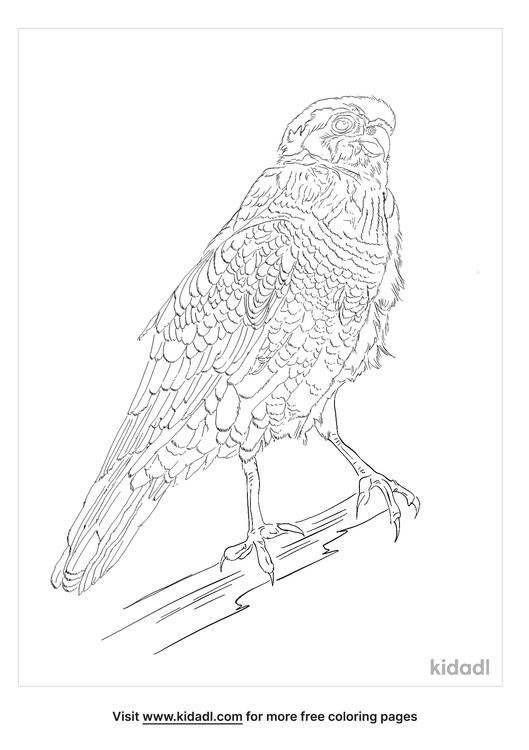 african-goshawk-coloring-page