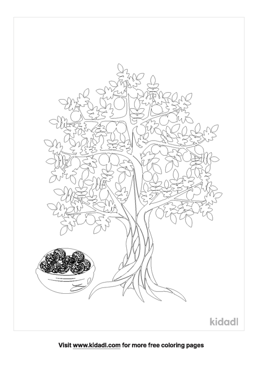 african-walnut tree-coloring-pages-1-lg.png