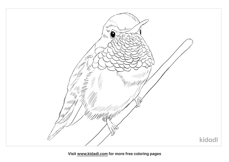 allens-hummingbird-coloring-page