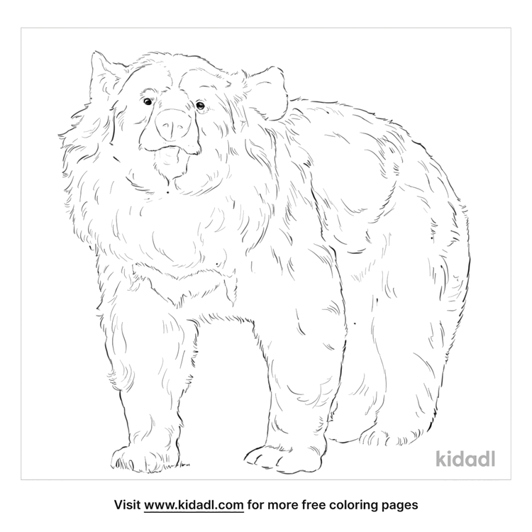 asiatic-black-bear-coloring-page