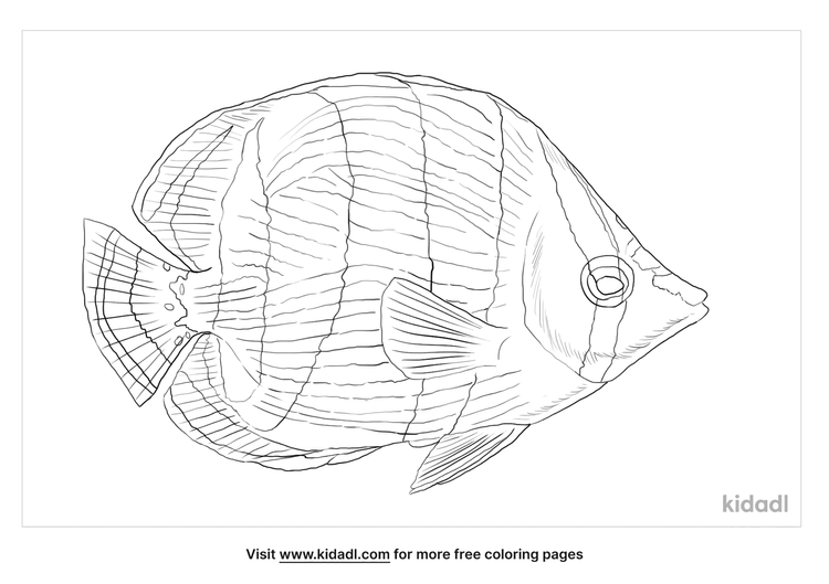 banded-butterflyfish-coloring-page
