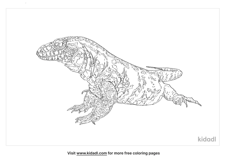 black-and-white-tegu-coloring-page