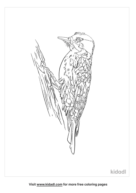 black-backed-woodpecker-coloring-page
