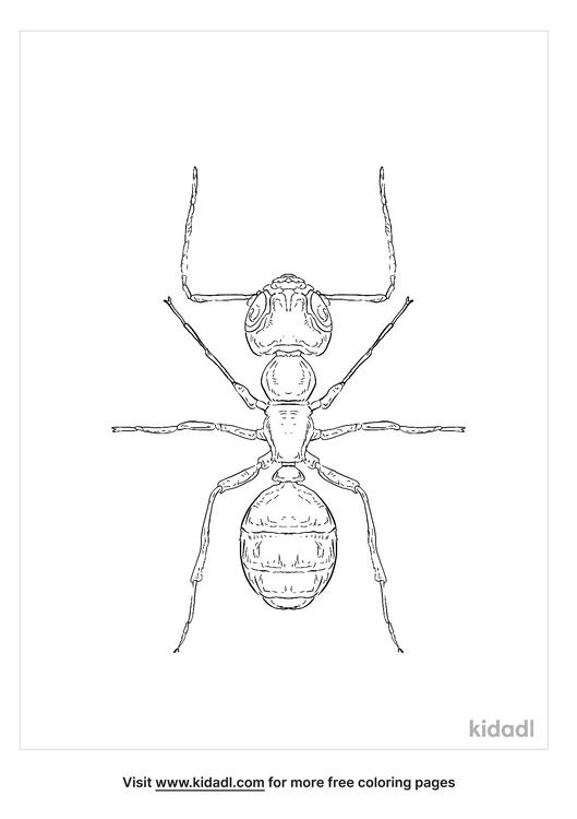 black-carpenter-ant-coloring-page