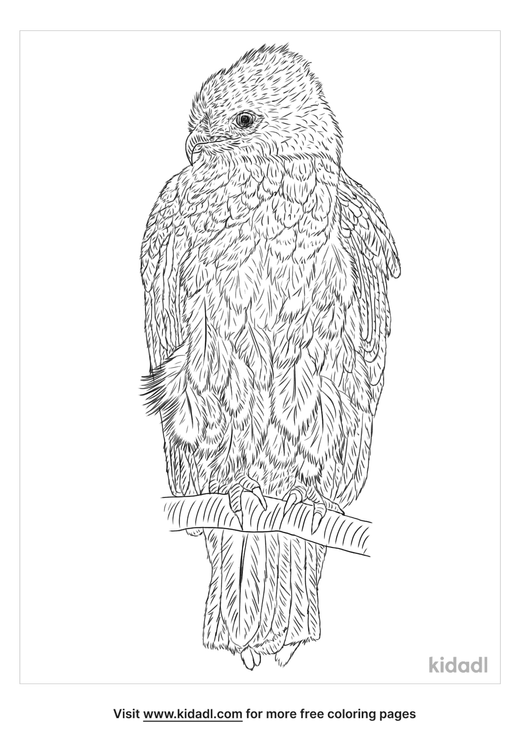 black-chested-snake-eagle-coloring-page