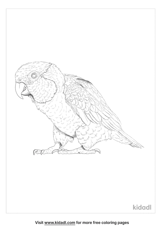 black-headed-parrot-coloring-page