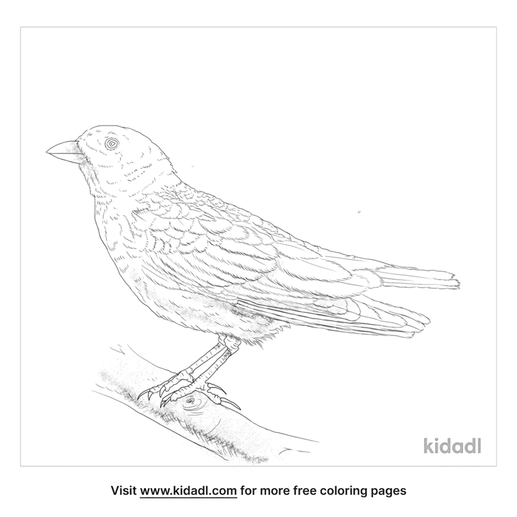 black-lark-coloring-page