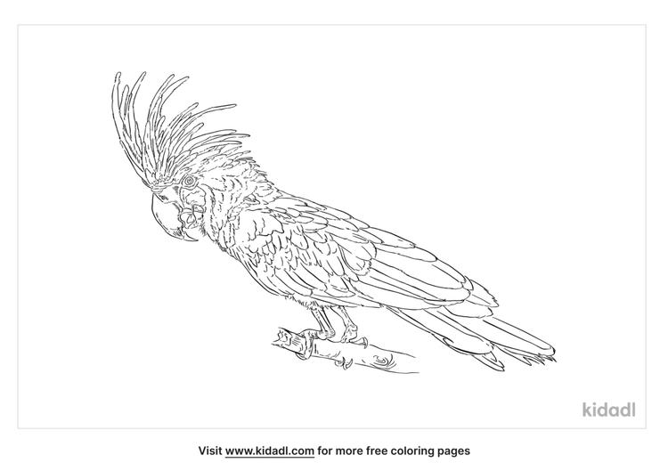 black-parrot-coloring-page