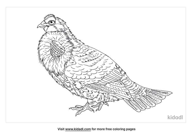blue-grouse-coloring-page