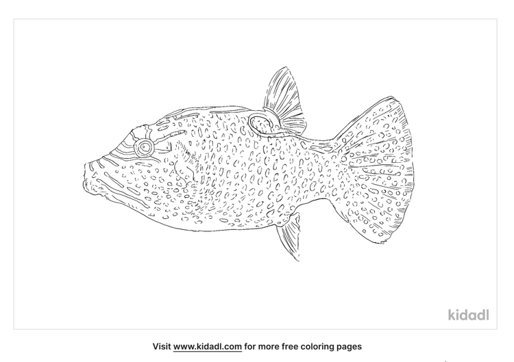 blue-spotted-puffer-coloring-page