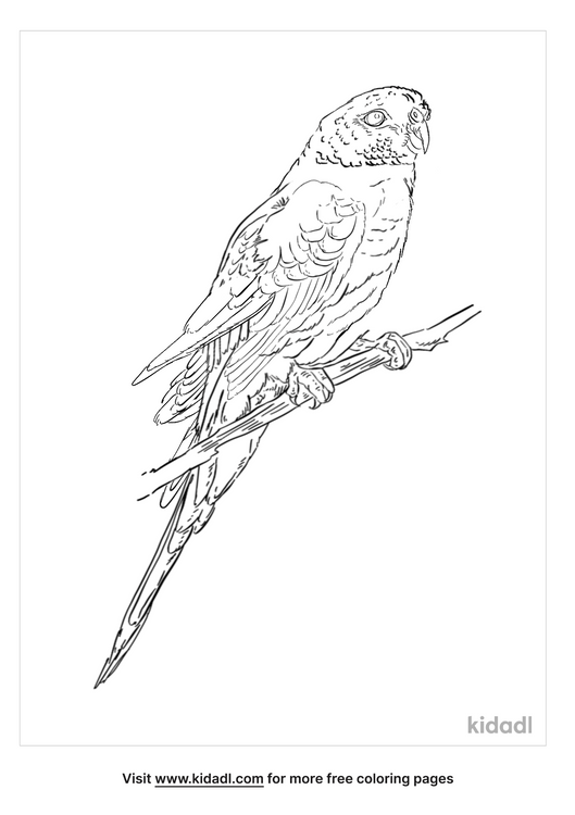 blue-winged-parrot-coloring-page