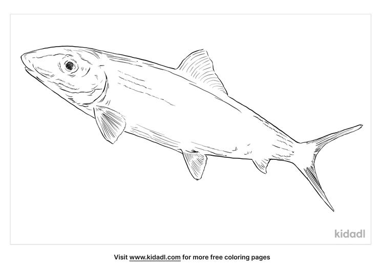 bonefish-coloring-page