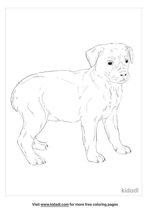 boxweiler-coloring-page