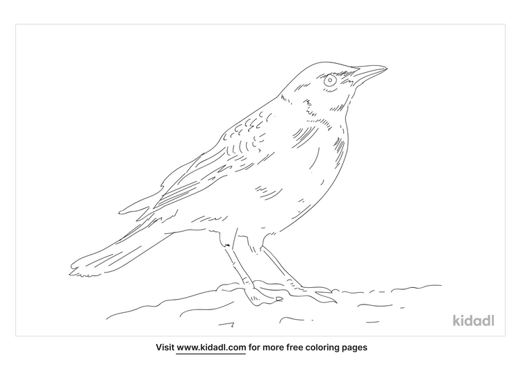 brewer-s-blackbird-coloring-page