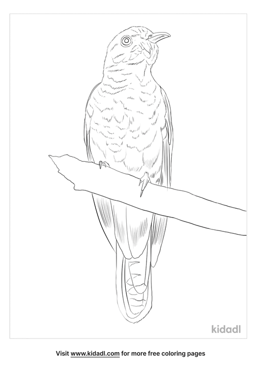 brush-cuckoo-coloring-page