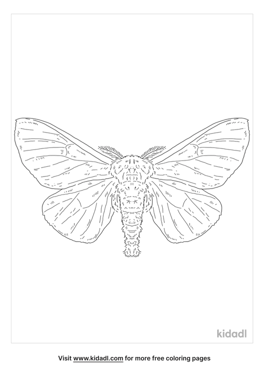 buck-moth-coloring-page