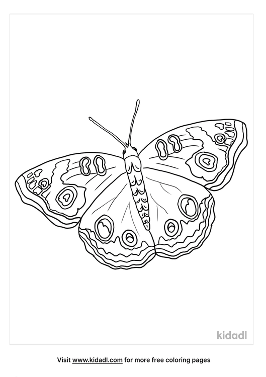 buckeye-butterfly-coloring-page.png