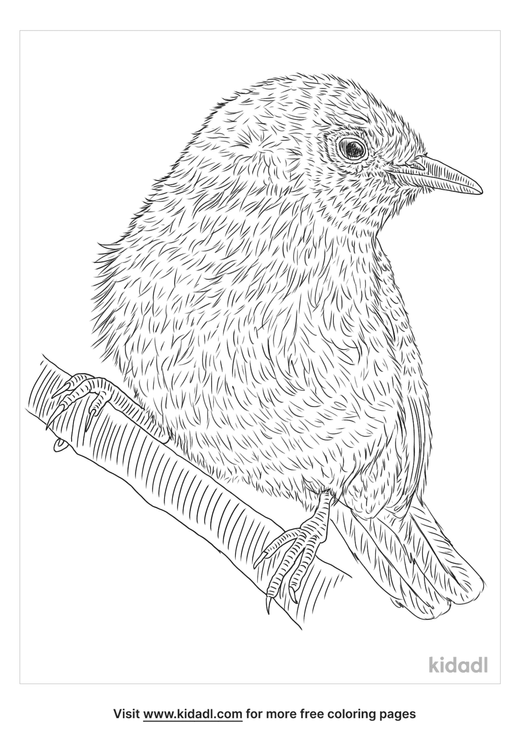 cape-white-eye-coloring-page
