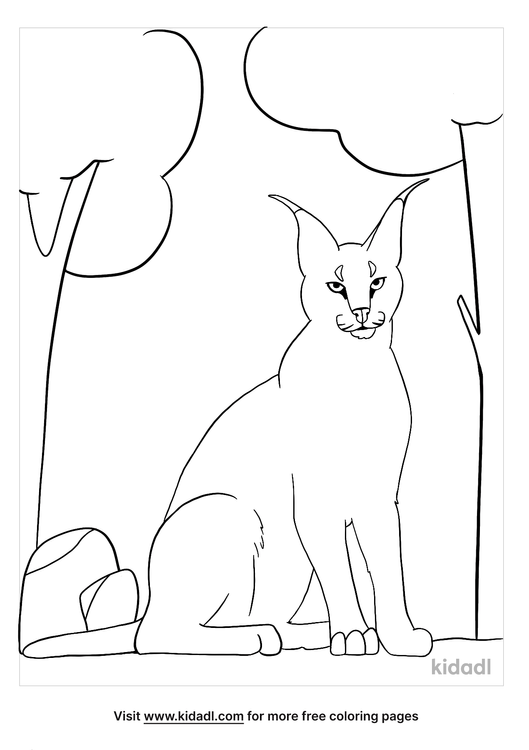 caracal coloring page-1-lg.png