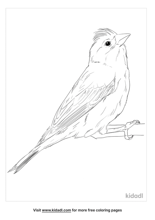 cassins-finch-coloring-page