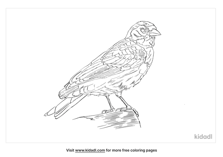 chaffinch-coloring-page
