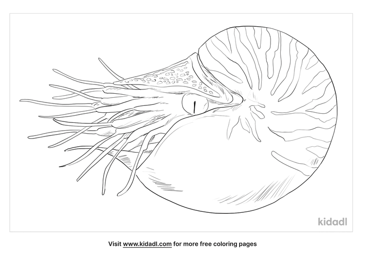 chambered-nautilus-coloring-page