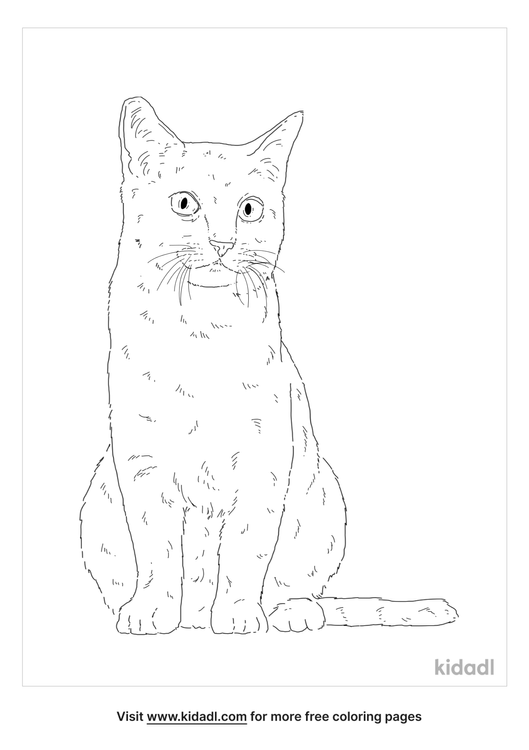 chartreux-coloring-page