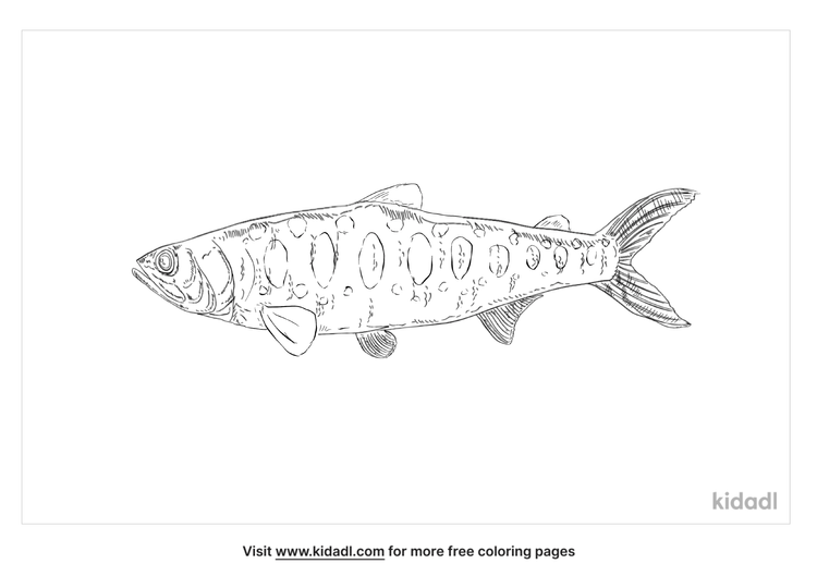 cherry-salmon-coloring-page