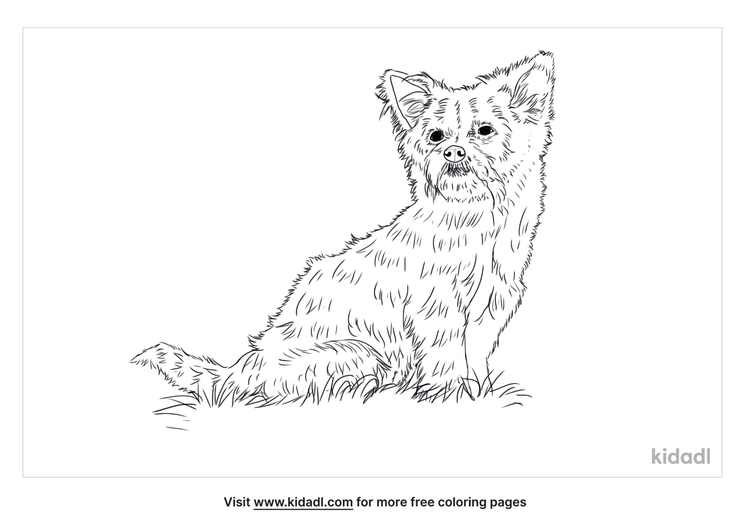 chorkie-coloring-page