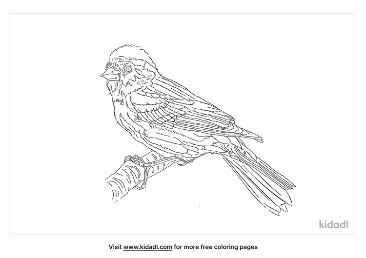 cinnamon-rumped-seedeater-coloring-page
