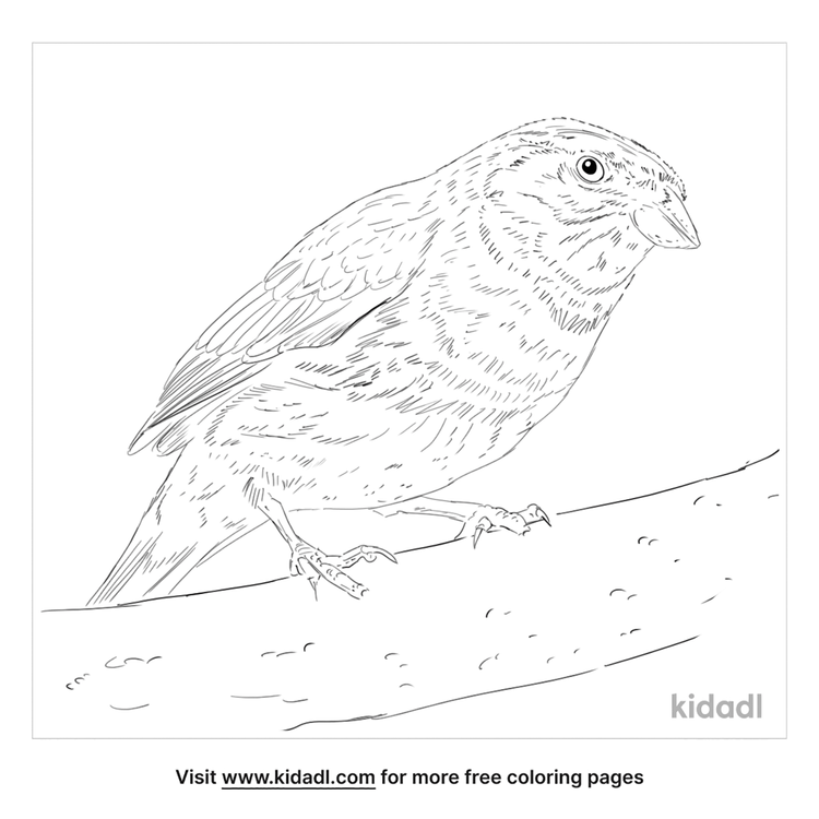 cirl-bunting-coloring-page
