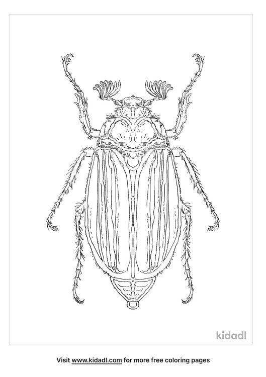 cockchafer-coloring-page