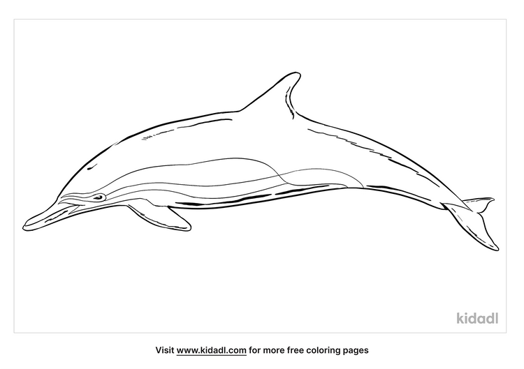 common-dolphin-coloring-page