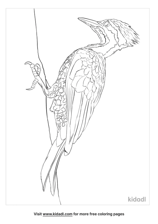 common-flameback-coloring-page
