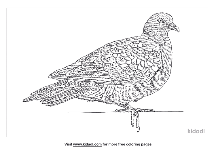 common-wood-pigeon-coloring-page