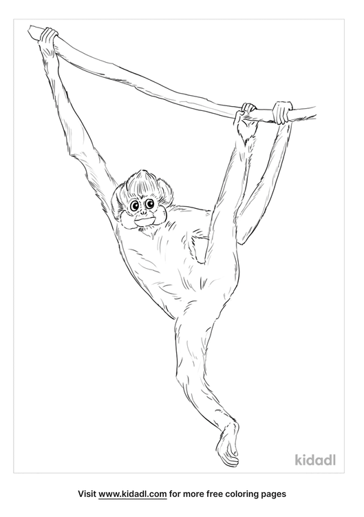 crested-gibbon-coloring-page