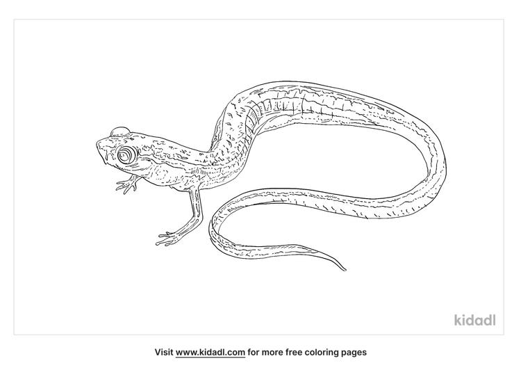 dwarf-salamander-coloring-page