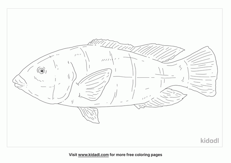 eastern-blue-groper-coloring-page