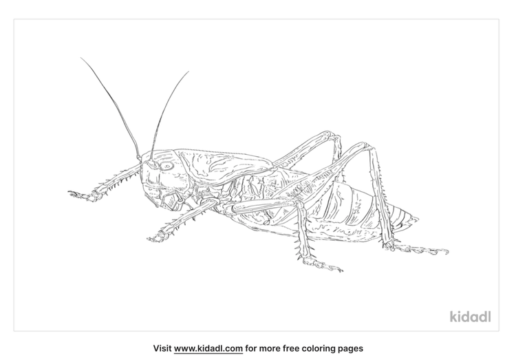 eastern-lubber-grasshopper-coloring-page
