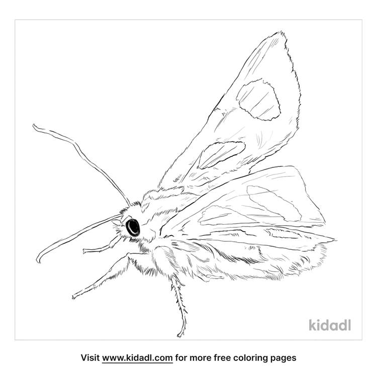 eight-spotted-forester-moth-coloring-page