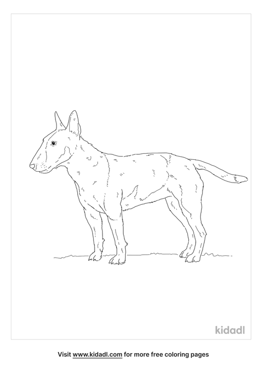 english-bull-terrier-coloring-page