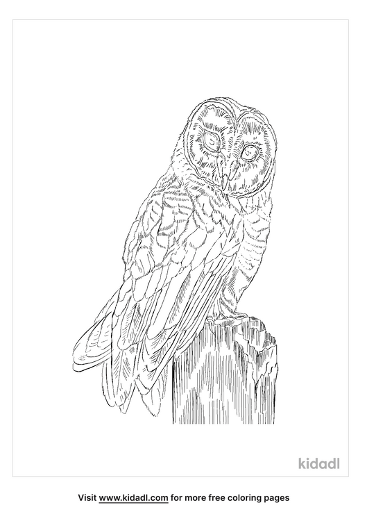 european-barn-owl-coloring-page