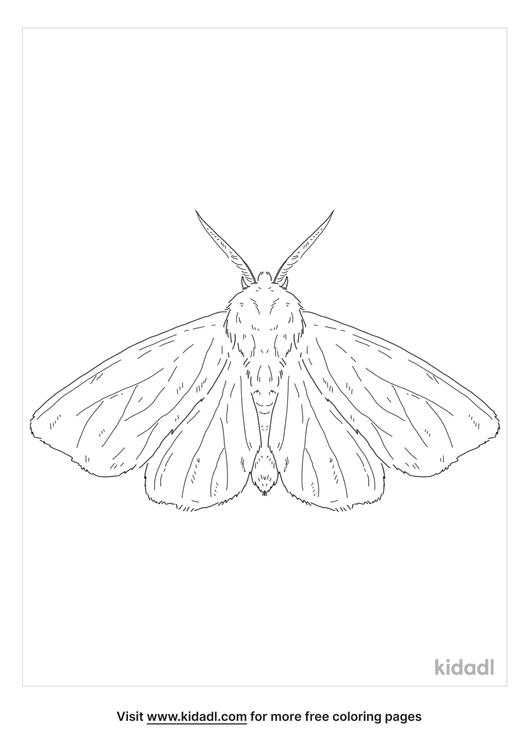 fall-webworm-moth-coloring-page