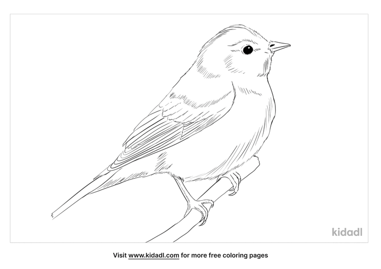 garden-warbler-coloring-page