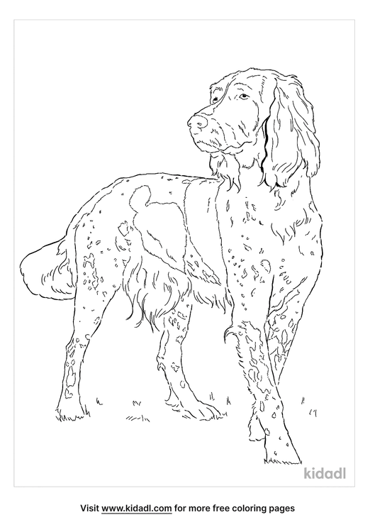 german-longhaired-pointer-coloring-page