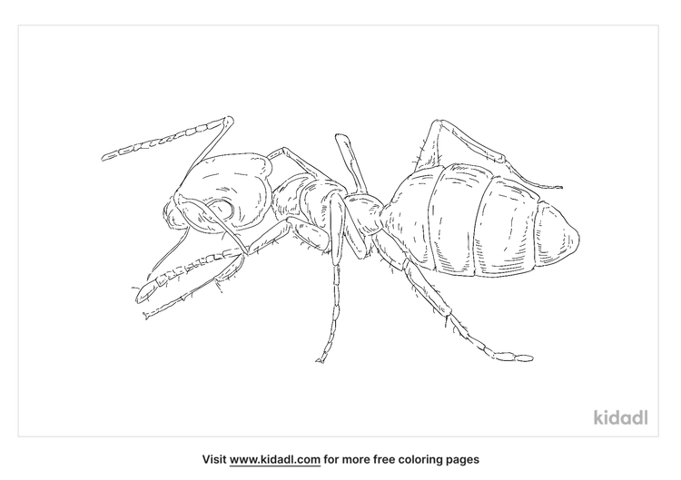 ghost-ant-coloring-page