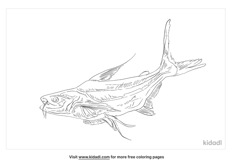 giant-pangasius-coloring-page