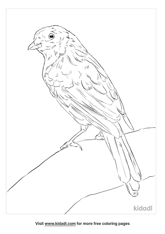 golden-bowerbird-coloring-page