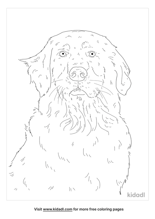 golden-mountain-dog-coloring-page