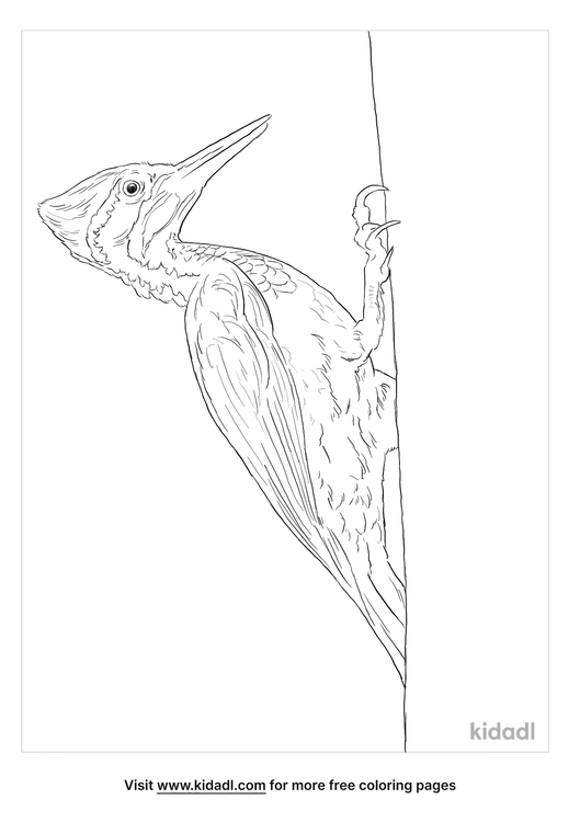 greater-flameback-coloring-page